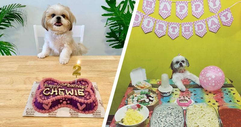 7-25-2019-EASY-ROCK-MANILA-FOOD-ARTICLE-CAKES-AND-HOME-COOKED-FOODS-FOR-HAPPY-PAWS