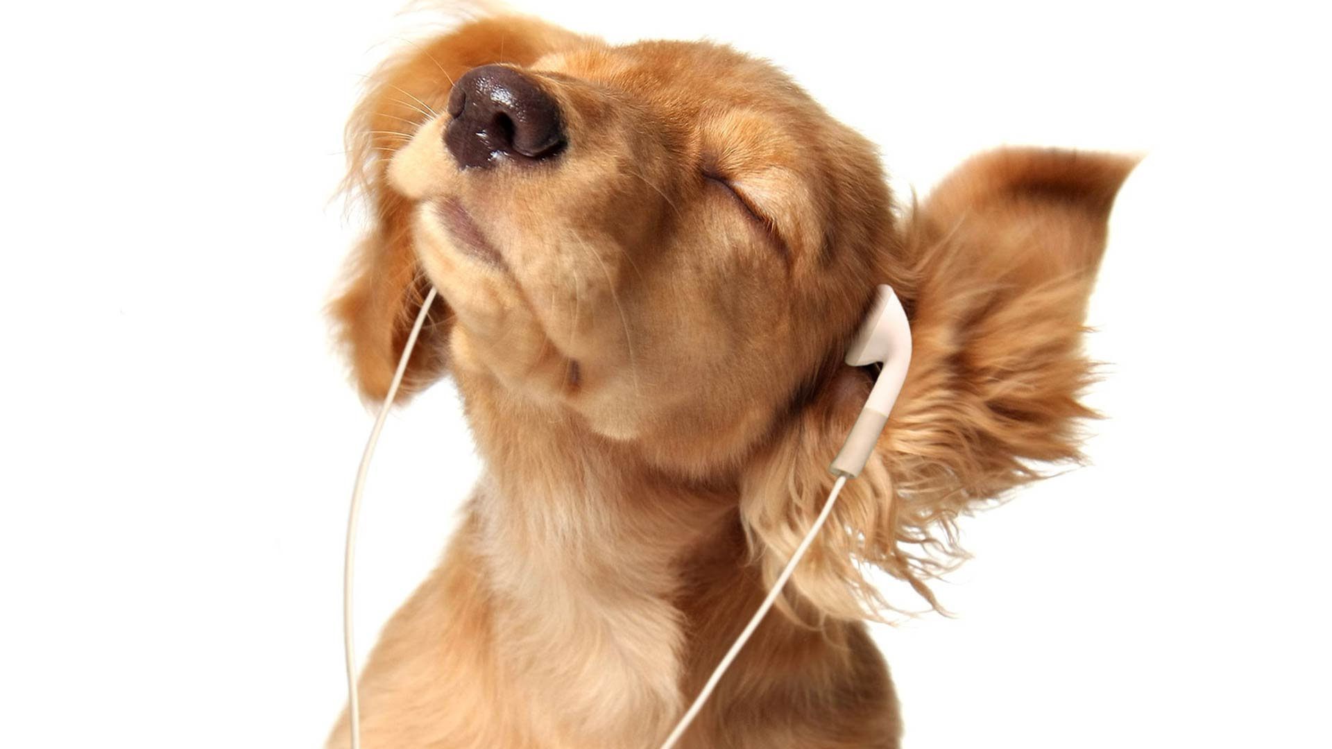 1-20-2020-SPOTIFY-REVEALS-PLAYLISTS-FOR-PETS